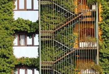 escalier vegetal
