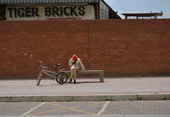 tiger bricks