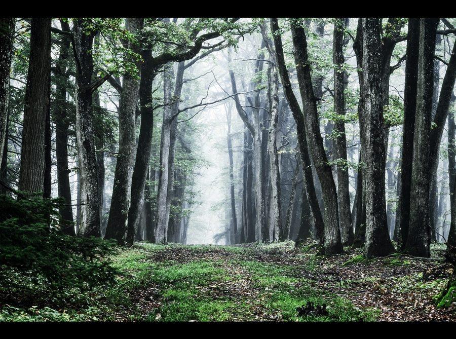 mystèrieuse forêt