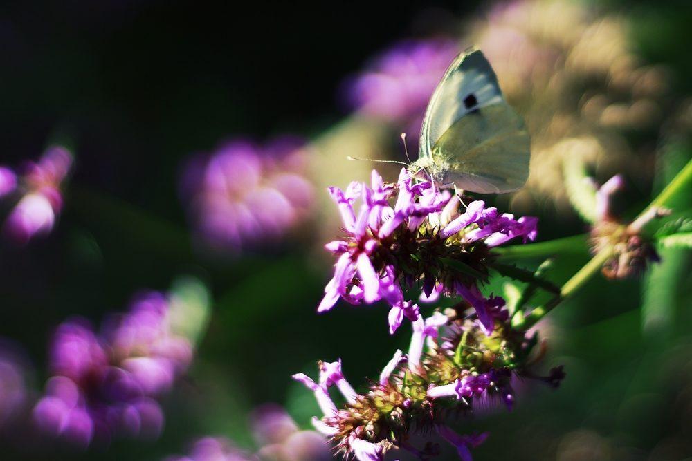 Papillon de couleurs.