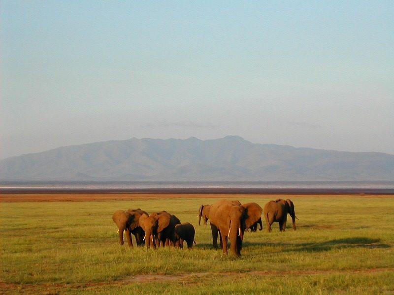 Éléphants au coucher de soleil