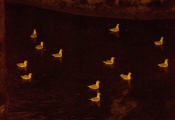 le soir dans la Seine