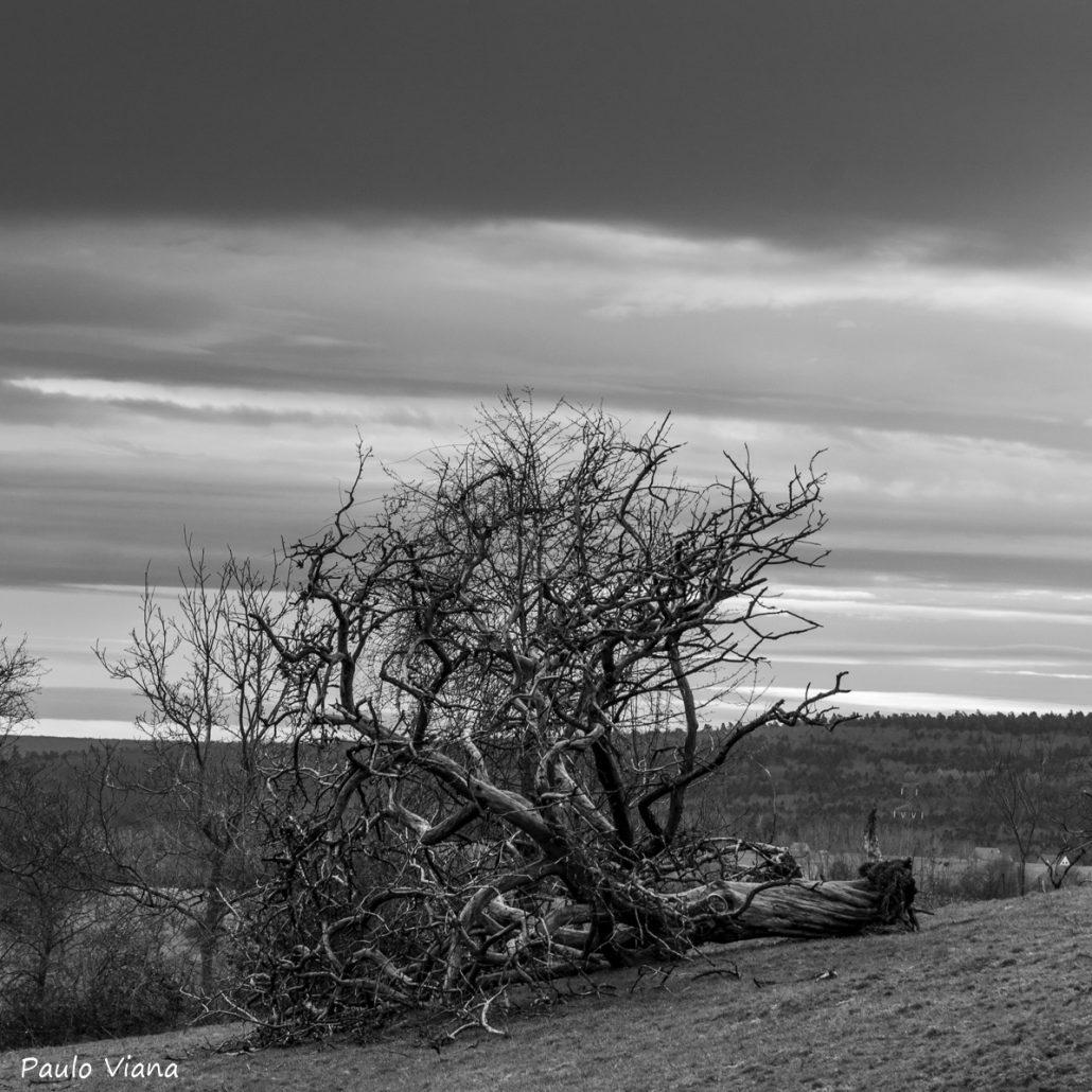 Dead tree…..