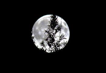 Moonstruck ..