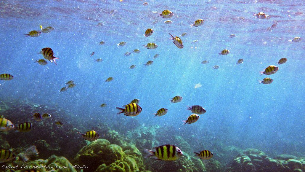 Snorkeling à Koh Lantha