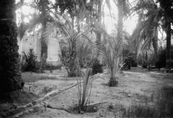 palmtrees in the oued