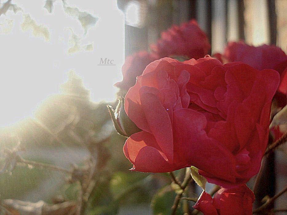 Flowerpower. (2)