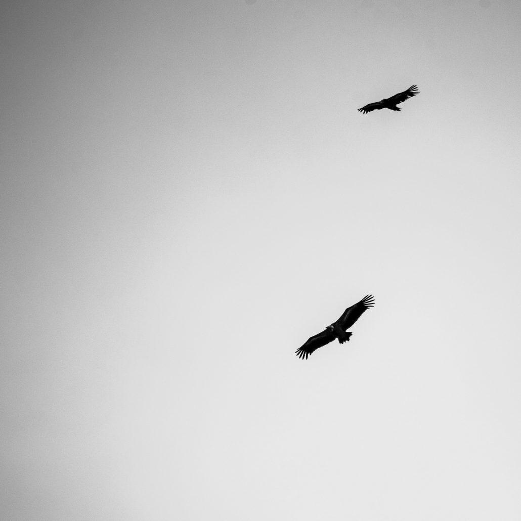 Vol au dessus d'un nid de coucou