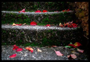 c'est l'automne, je crois...