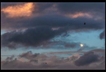 le Goeland et la Lune