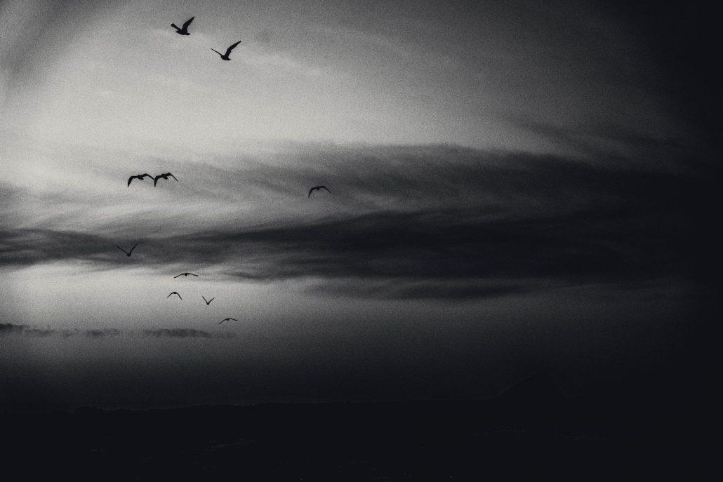 migration nocturne