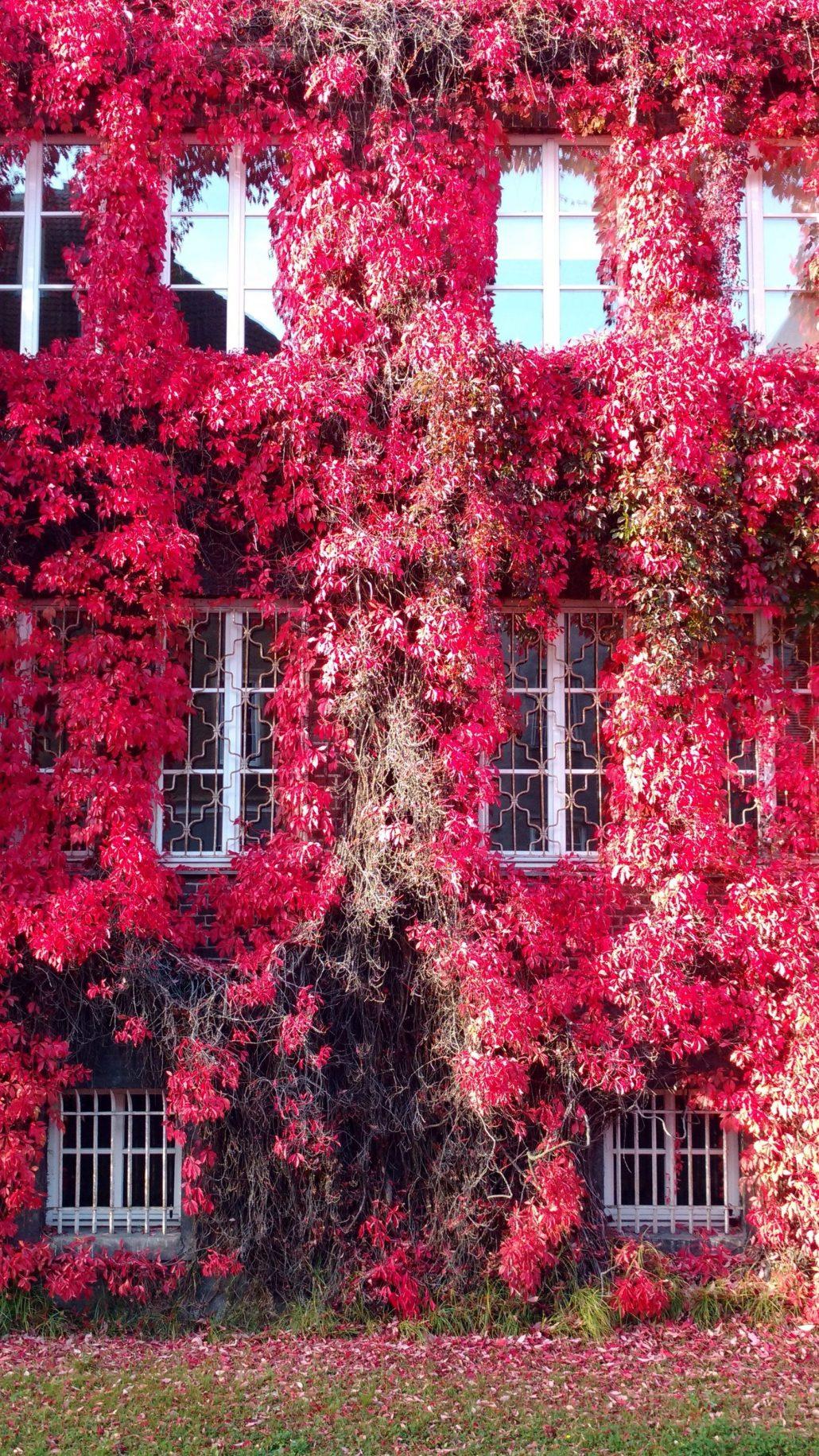 Jardin rouge vertical