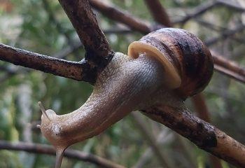 Escargot sur branche
