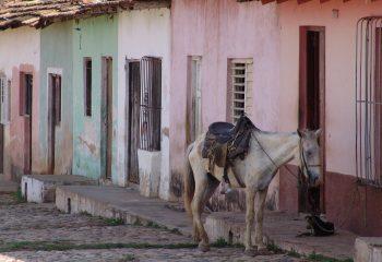 El caballo y el perro