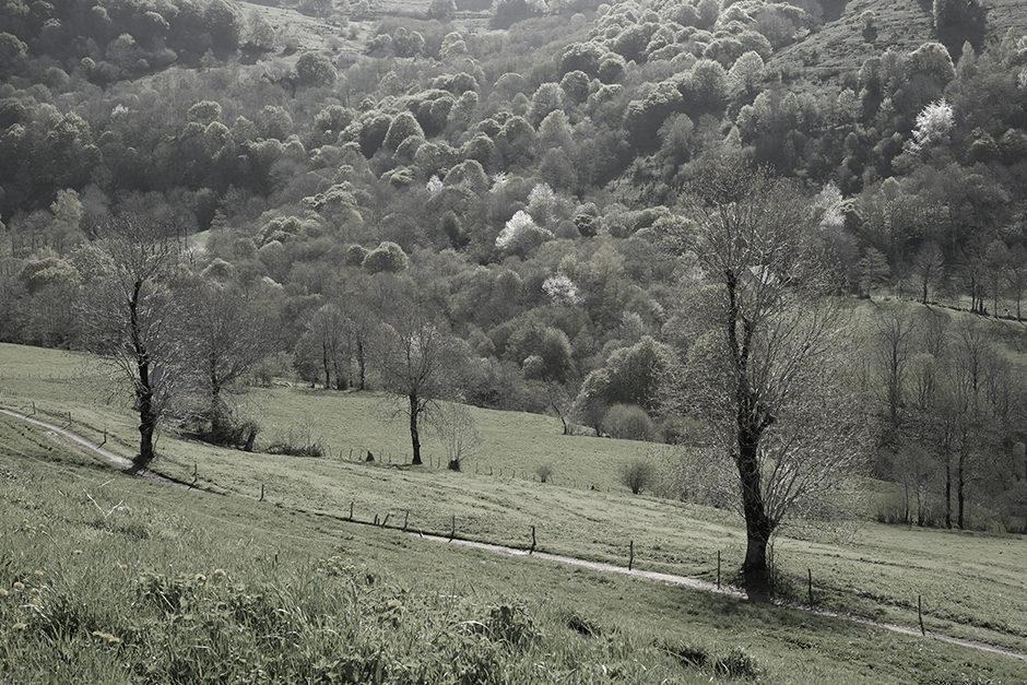 Paysage du Cantal autour de Thiézac