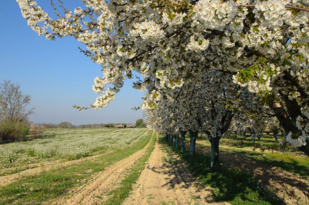 c'est le printemps !!!