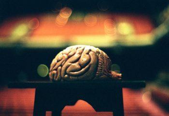 Un cerveau et son public.
