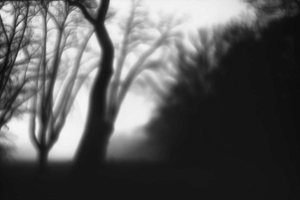 The analog incident 1 (les arbres fantomes)