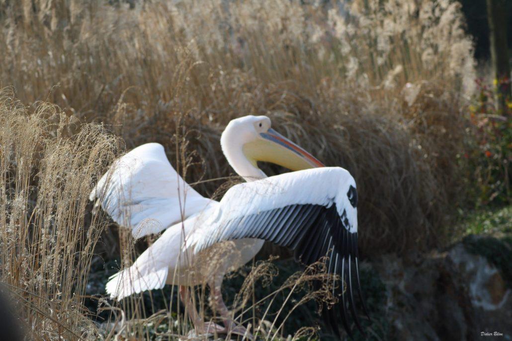 Flight of birds – IMG – 4424
