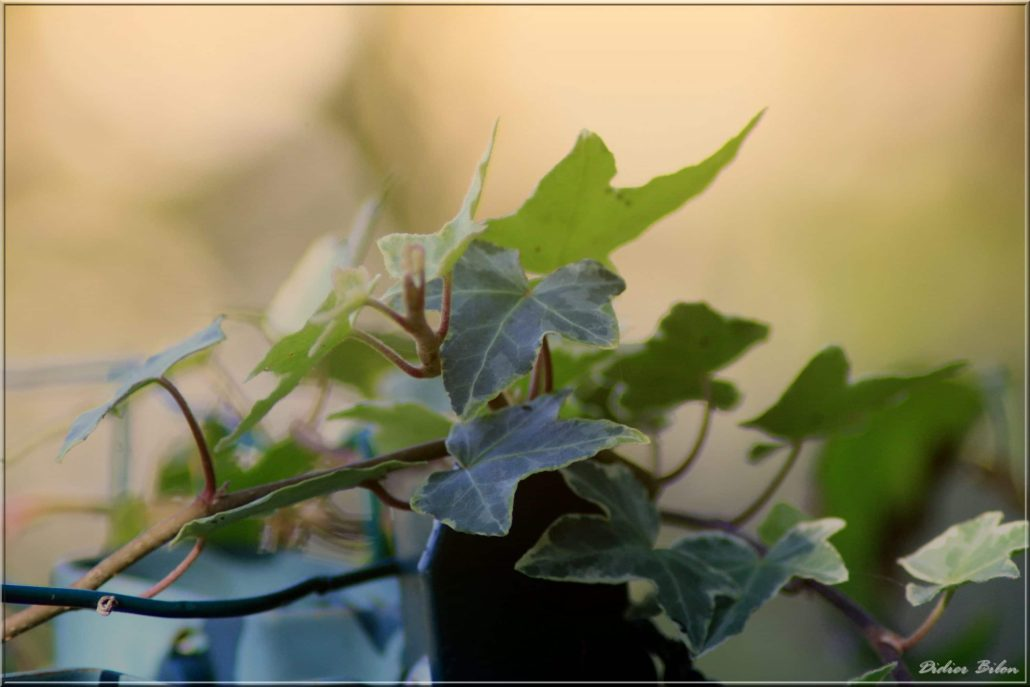 plant painting photography – IMG298