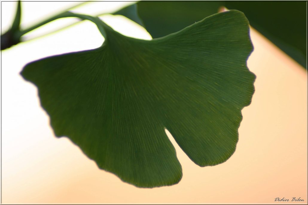 plant painting photography – IMG437