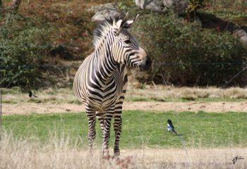 Safari discovery IMG - 2799