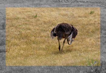 Safari discovery IMG - 3298-2