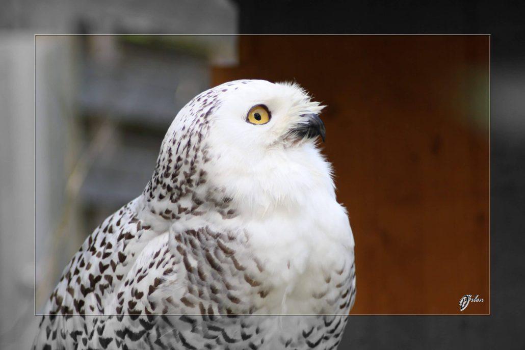 birds of prey – IMG – 3380-2