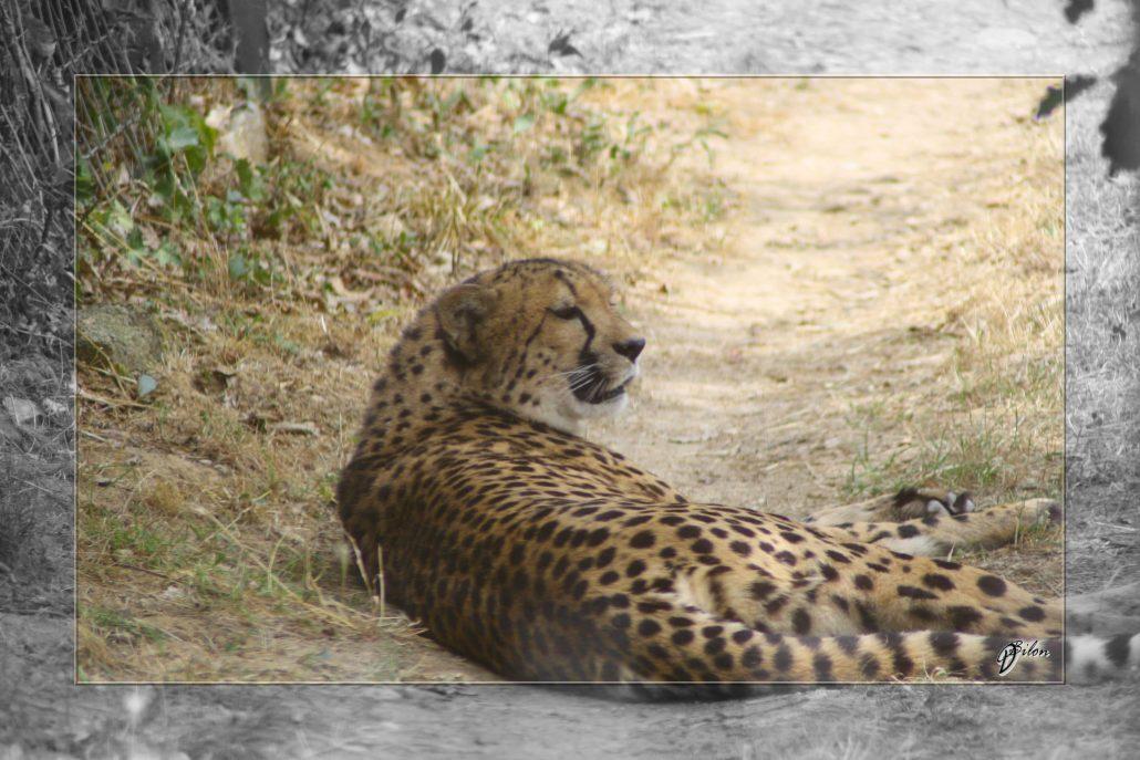 Safari discovery IMG – 3412-2