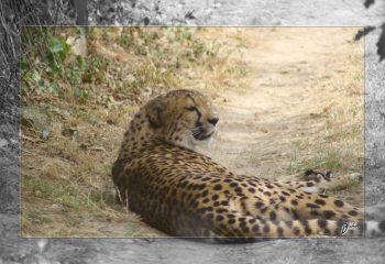 Safari discovery IMG - 3412-2
