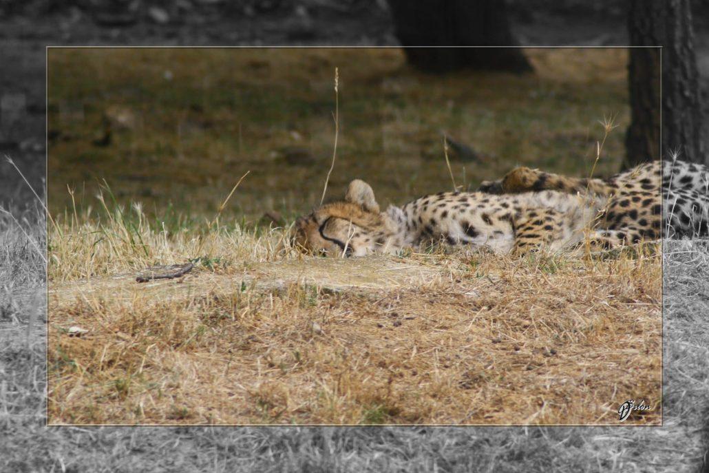 Safari discovery IMG – 3414-2