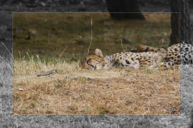 Safari discovery IMG - 3414-2