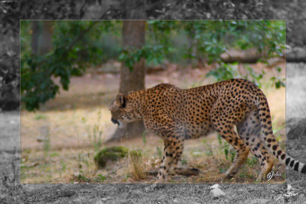 Safari discovery IMG – 3446-2
