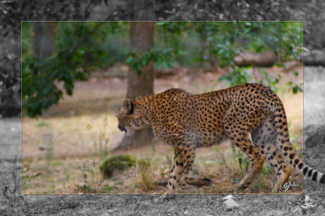 Safari discovery IMG - 3446-2