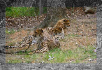 Safari discovery IMG - 3450-2