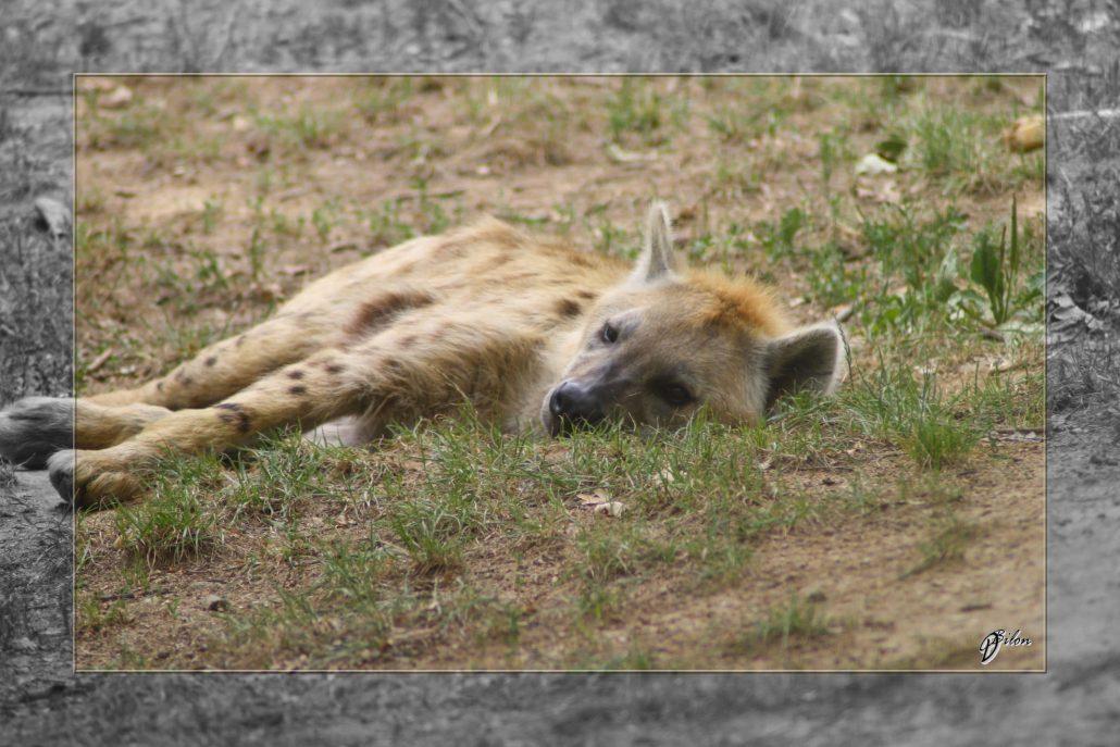 Safari discovery IMG – 3454-2