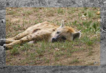 Safari discovery IMG - 3454-2