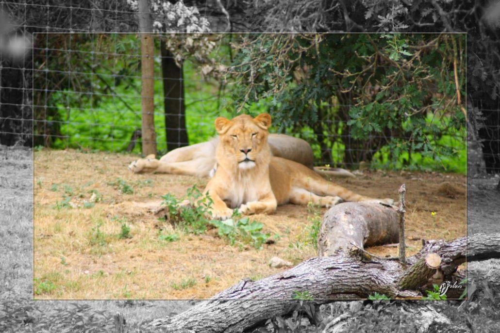 Safari discovery IMG – 3456-2