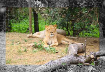 Safari discovery IMG - 3456-2