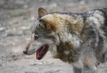 Safari discovery IMG - 3465-2