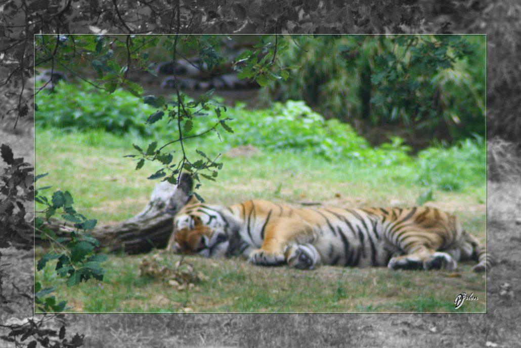 Safari discovery IMG – 3467-2