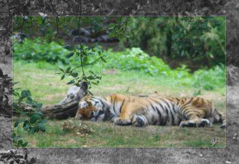 Safari discovery IMG - 3467-2