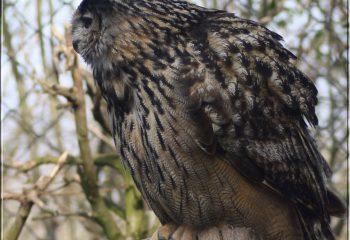 birds of prey - IMG 6844