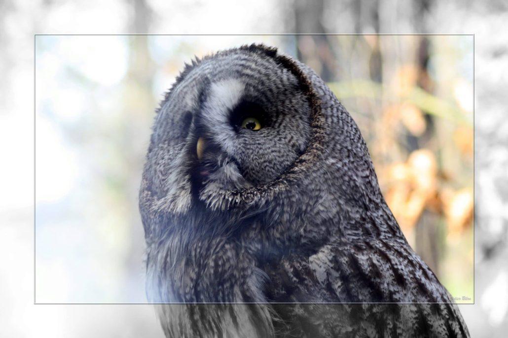 birds of prey – IMG – 68473325