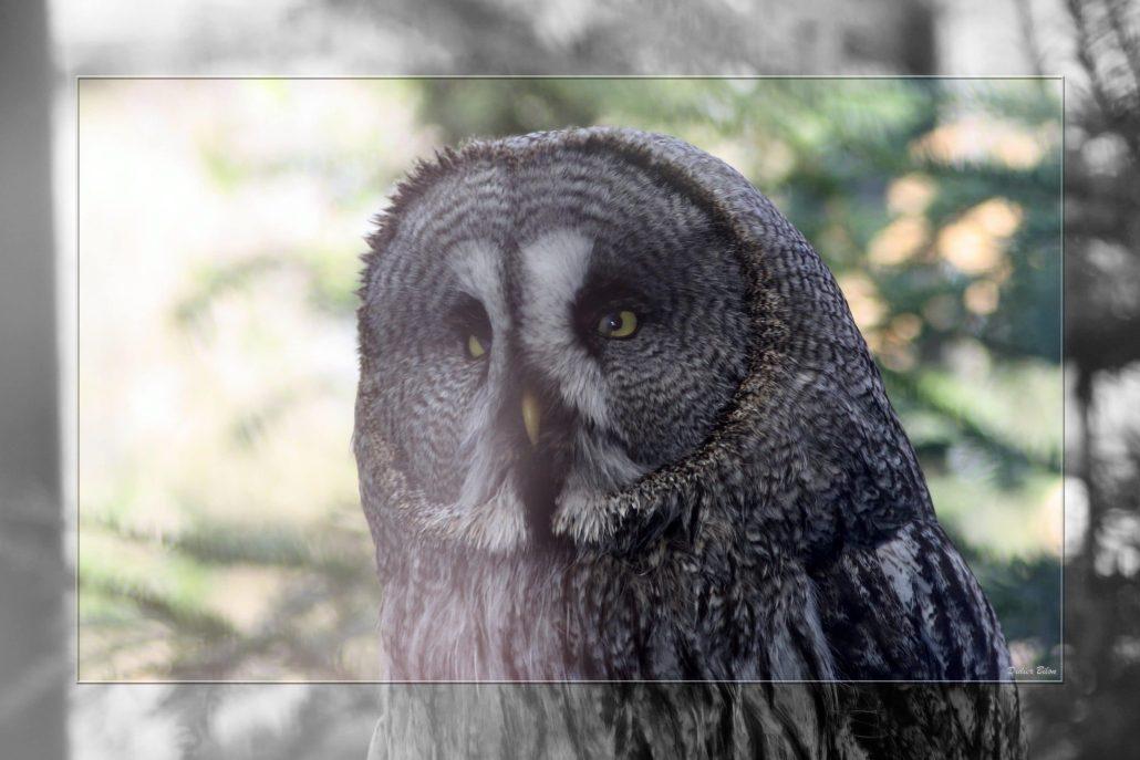 birds of prey – IMG – 68483326