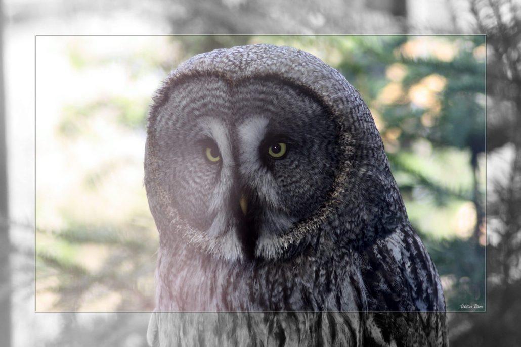birds of prey – IMG – 68493327