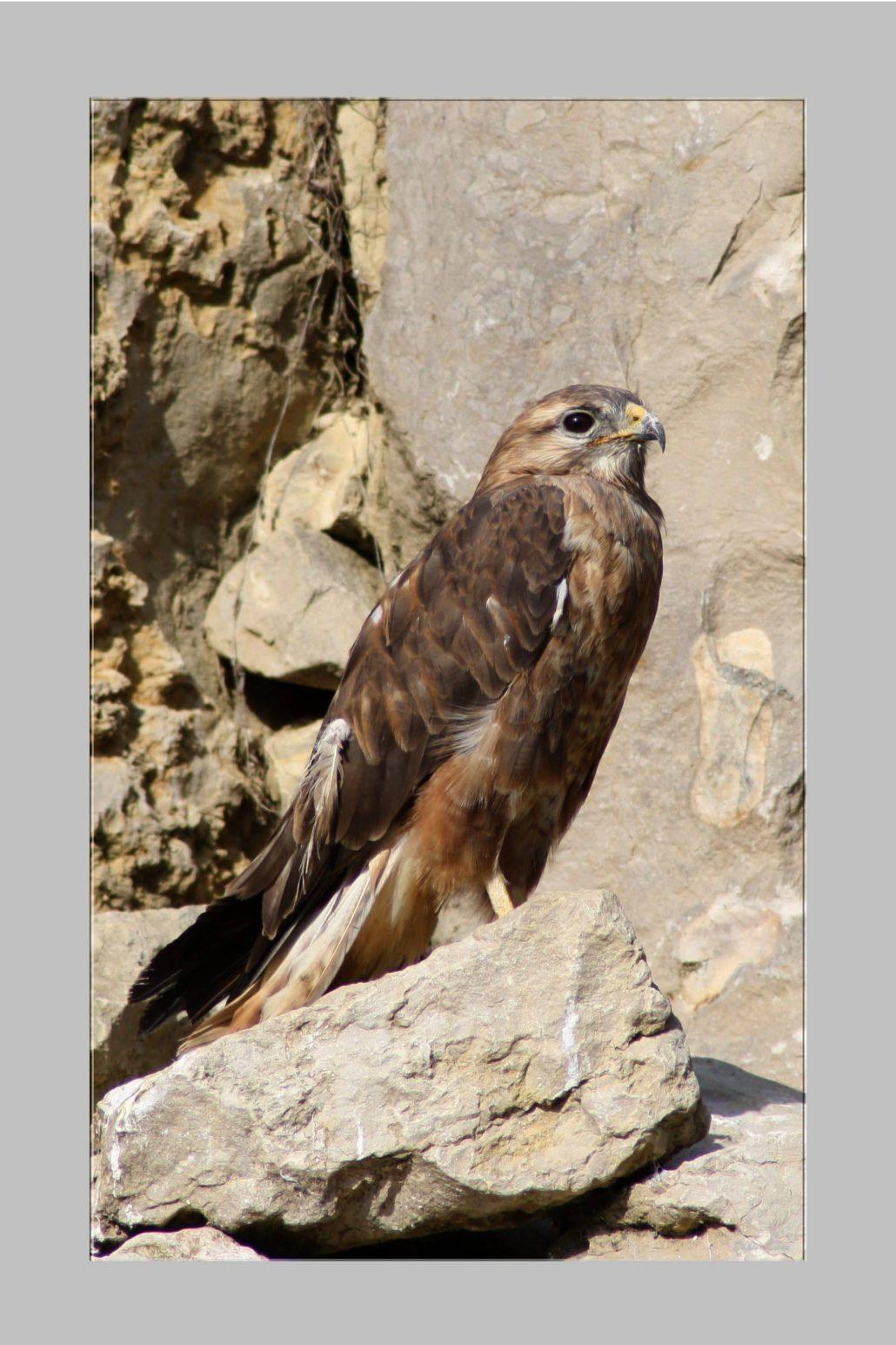 birds of prey – IMG – 68553333