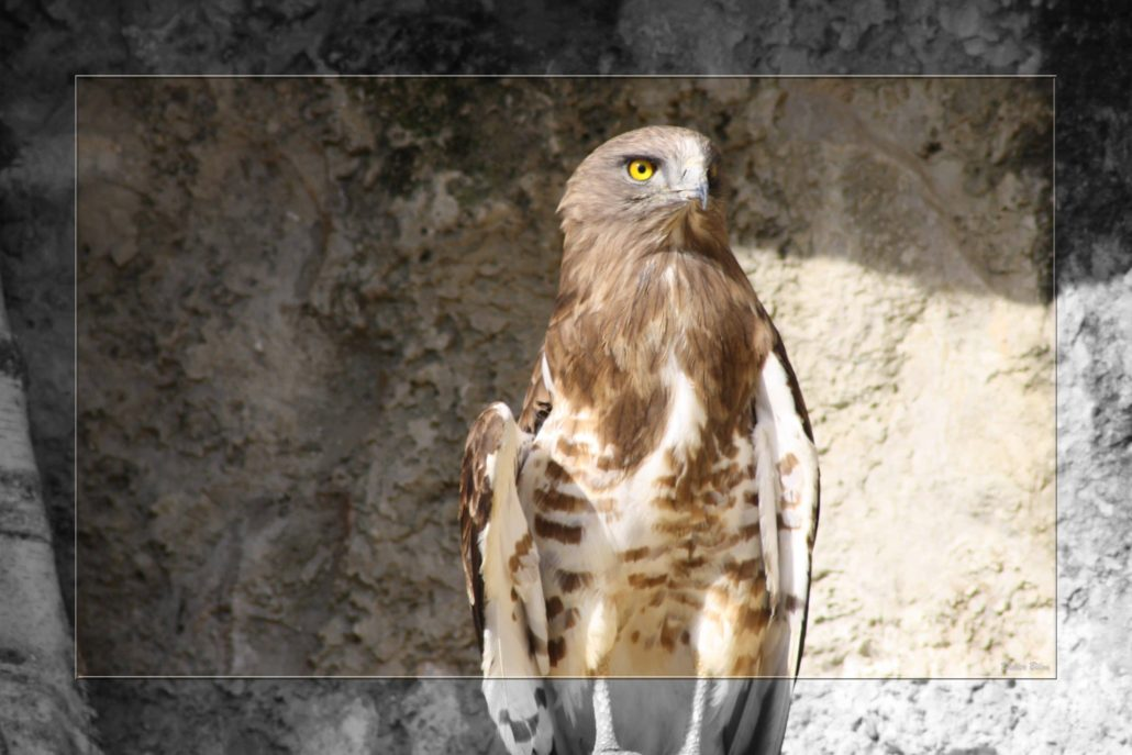 birds of prey – IMG – 68573335