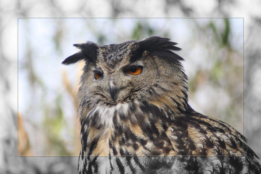 birds of prey – IMG – 6992