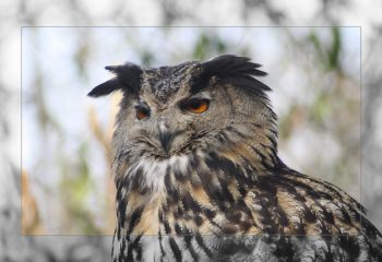 birds of prey - IMG - 6992